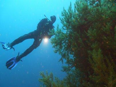 Punkfish Diving