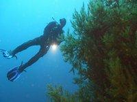 Buceo profundo entre corales negros