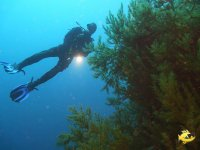 Deep Black Coral Diving