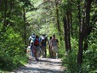 Siguiendo el Camino de Santiago