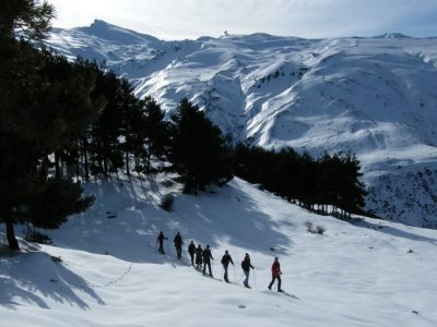 Mamut Sierra Nevada Orientación