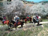 A caballo con arboles en flor