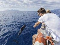 在太阳海岸观看海豚