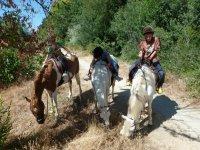 Caballos pastando en el camino