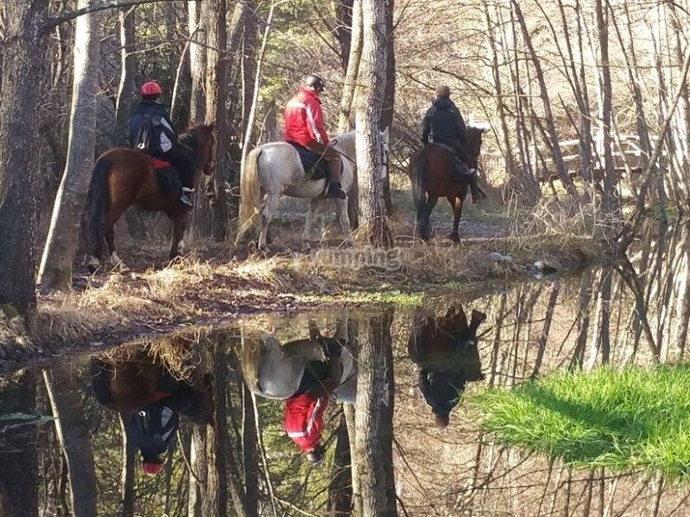 Caballos reflejados en el agua