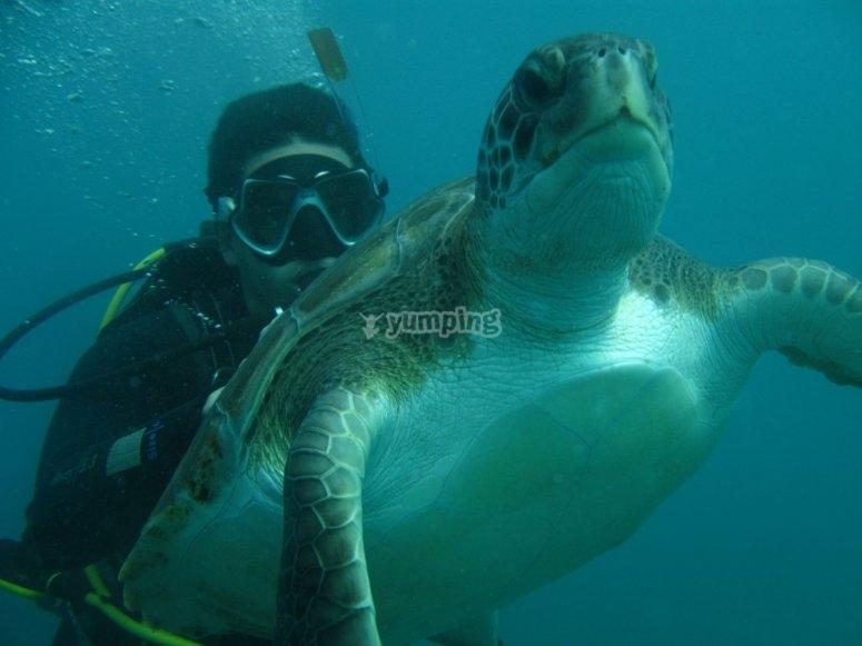 Buceando entre tortugas