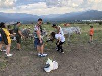 Visitando a los burros