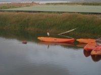 Una garza sobre el kayak