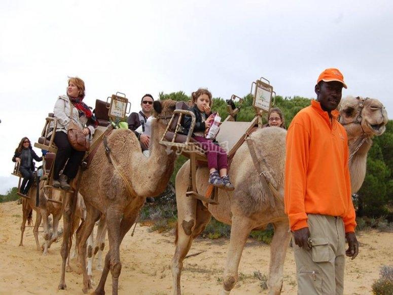 Paseo en camello en Huelva