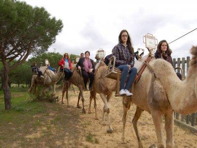Paseo en Camello por Doñana 1h Adultos