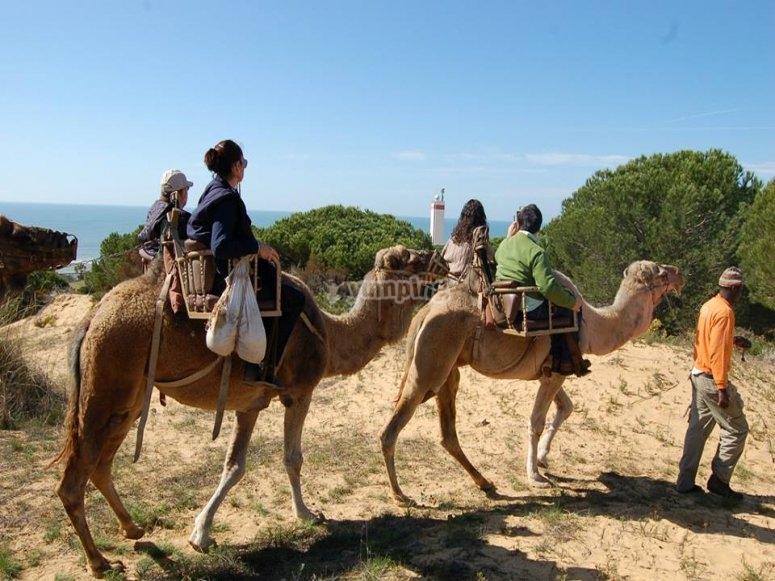 Paseo en camello en Huelva para niños