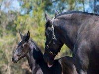 los caballos en equitur