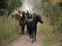 paseando a los caballos