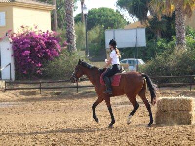 Clases de Equitación nivel intermedio 45min Cádiz