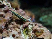 好奇的海洋动物