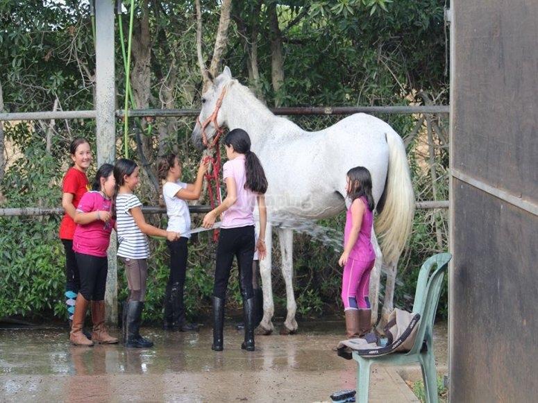Washing the horse