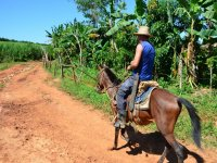 骑马头盔马比尼亚莱斯大道马照片剪裁