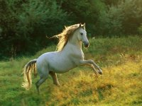 女子骑着棕色马在外地白马跳跃