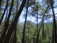 Bosques de la sierra de cazorla