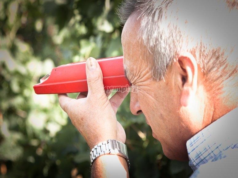 Observando los viñedos
