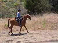 A cavallo nella catena montuosa Cazorla