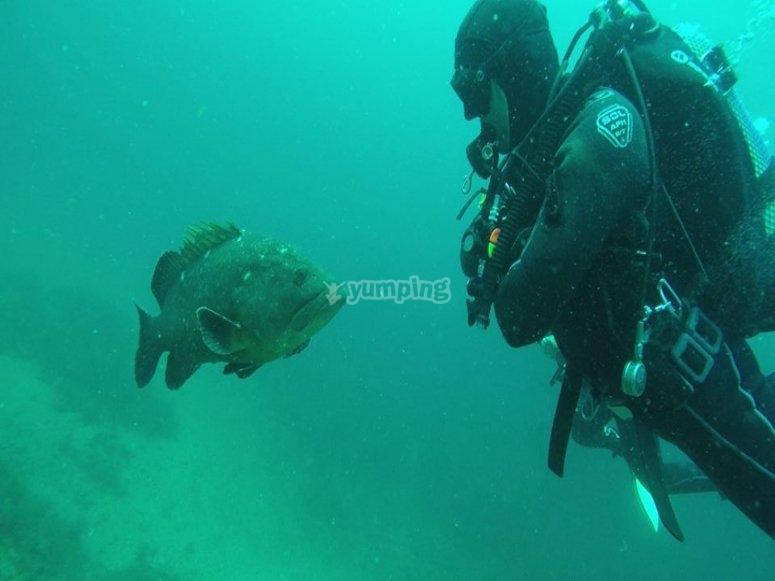 Saludando al pez