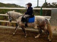 Corso di equitazione di gruppo di 45 minuti, Marbella