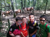De visita a los caballos