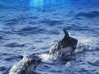 Dos delfines SportTarifa