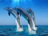 Tres delfines con SportTarifa