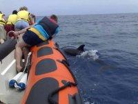 avistamiento de cetaceos desde lancha