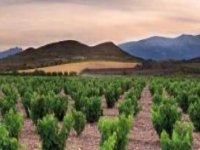 Tour vineyards and wineries in Aragon