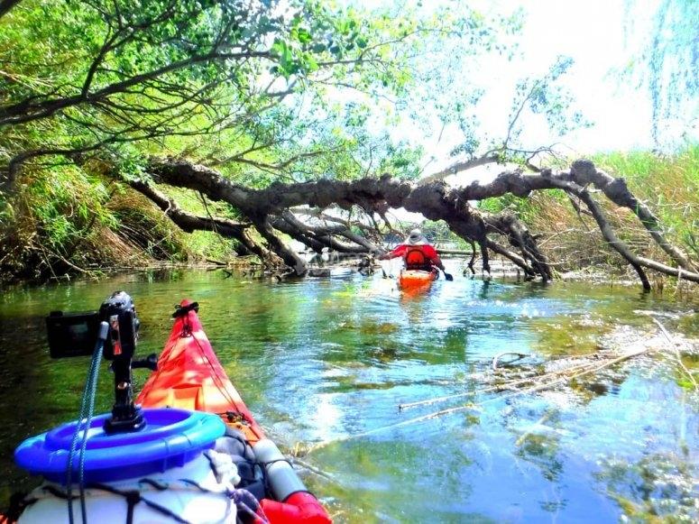 Descubre la naturaleza en kayak