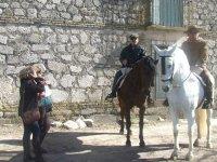 与农场中的马匹