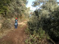 Pines路线