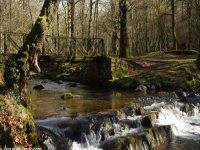 Campamento de inglés en la naturaleza
