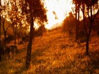 Estacionalidad Los colores del otoño