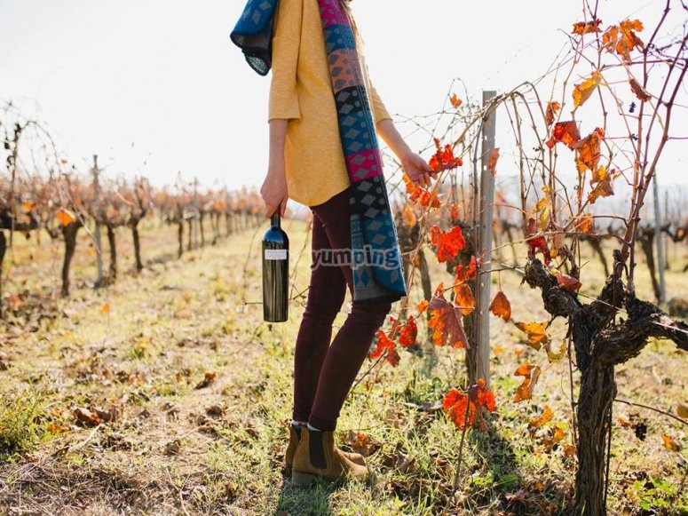 otoño en los viñedos