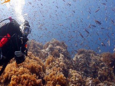 Bautizo de buceo en Cabo de Palos