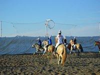 horseball in the sand