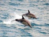 Delfines nadando en Tarifa