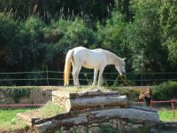 Horse Agility con obstaculos