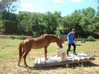 Horse Agility en pasarela