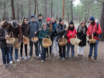 Mycological routes in the province of Soria
