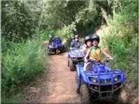 Quad biking in the forest