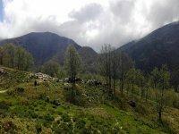 Caballos en el Valle del Jerte