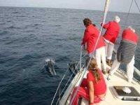 观察比斯开湾的鲸豚