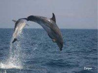 海豚,普通,骡子,飞行员鲸鱼......