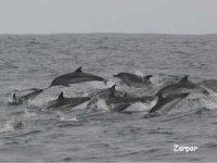 享受自由观赏海豚