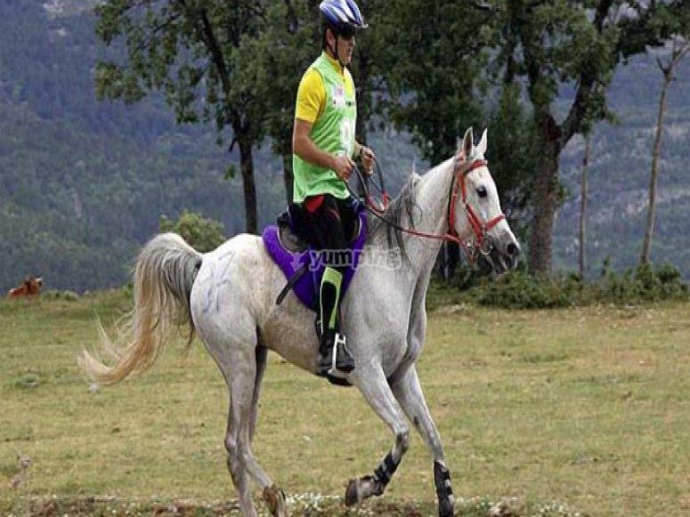 Horse riding & English camp
